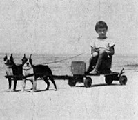 Girl_towed_by_two_small_dogs.jpg